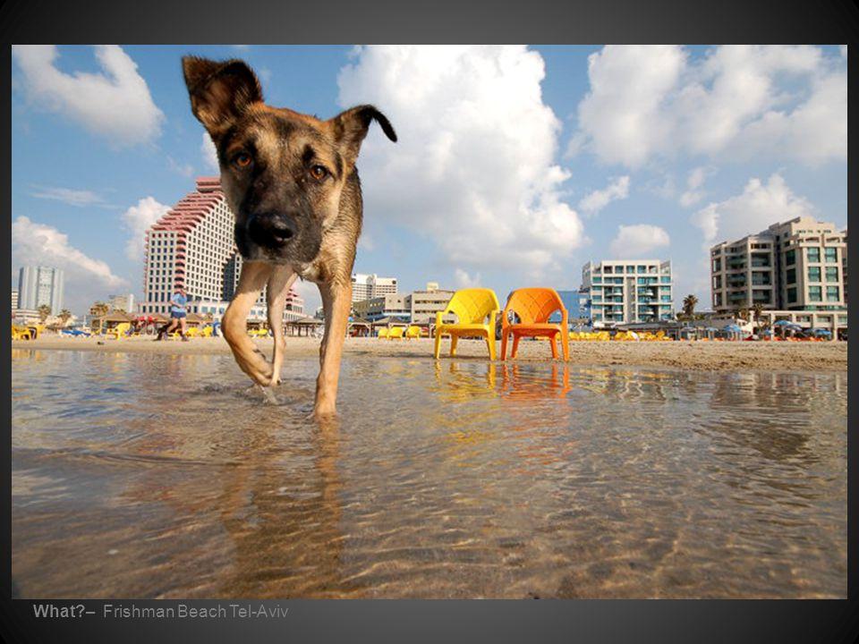 What – Frishman Beach Tel-Aviv