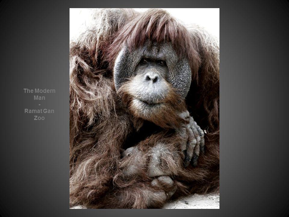 The Modern Man - Ramat Gan Zoo