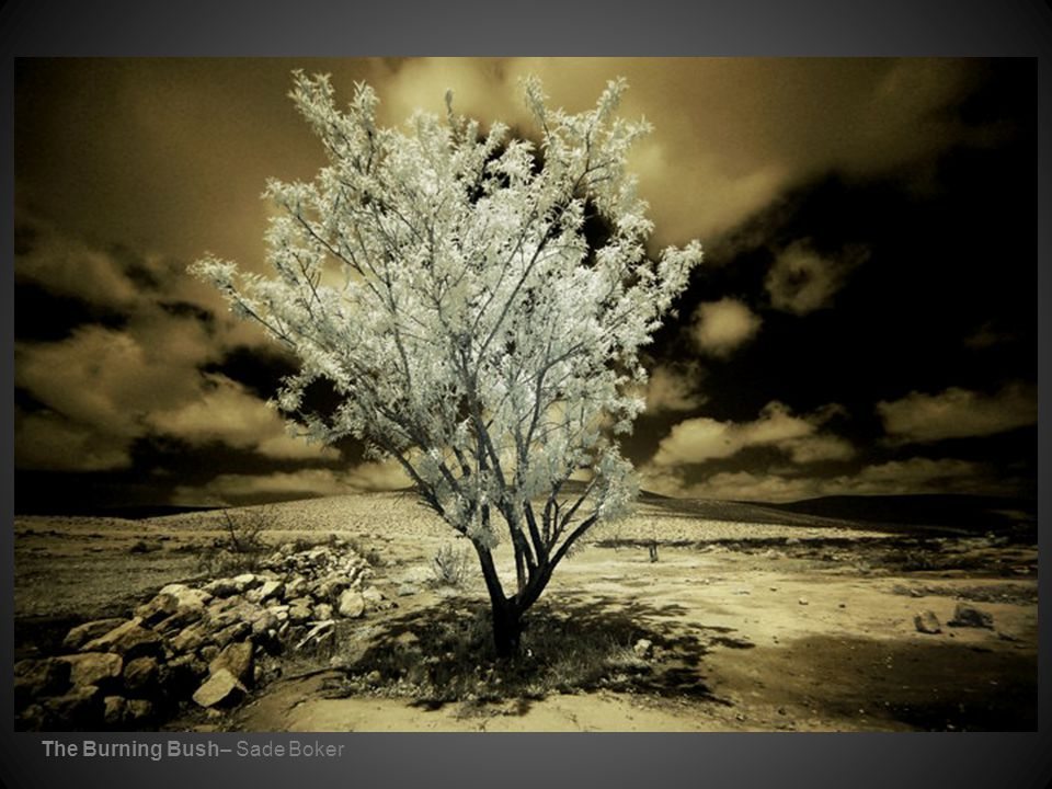 The Burning Bush– Sade Boker