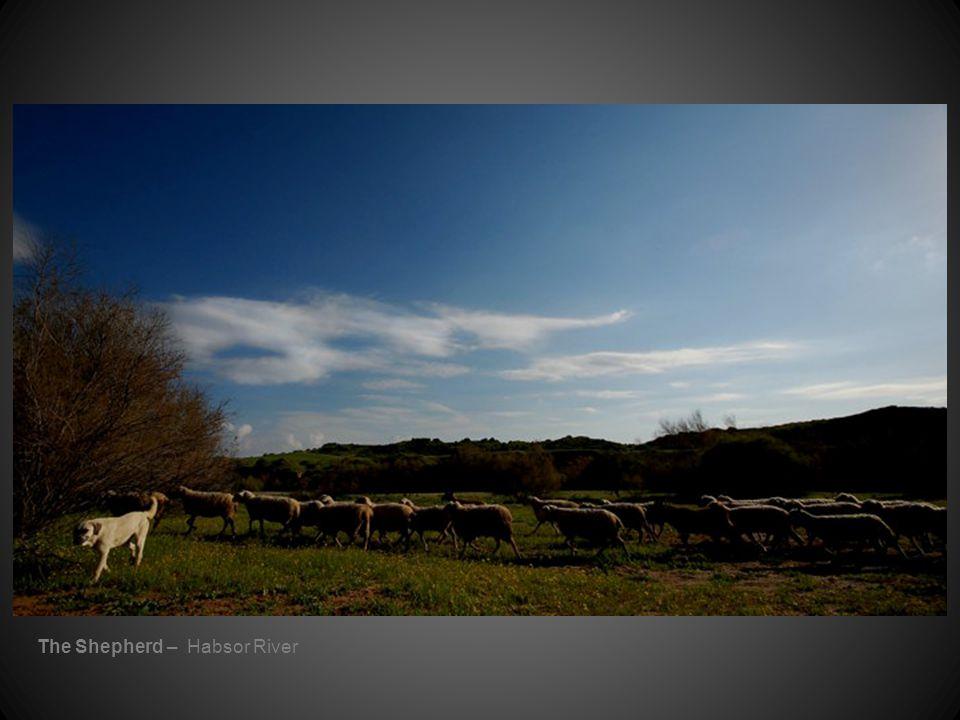 The Shepherd – Habsor River