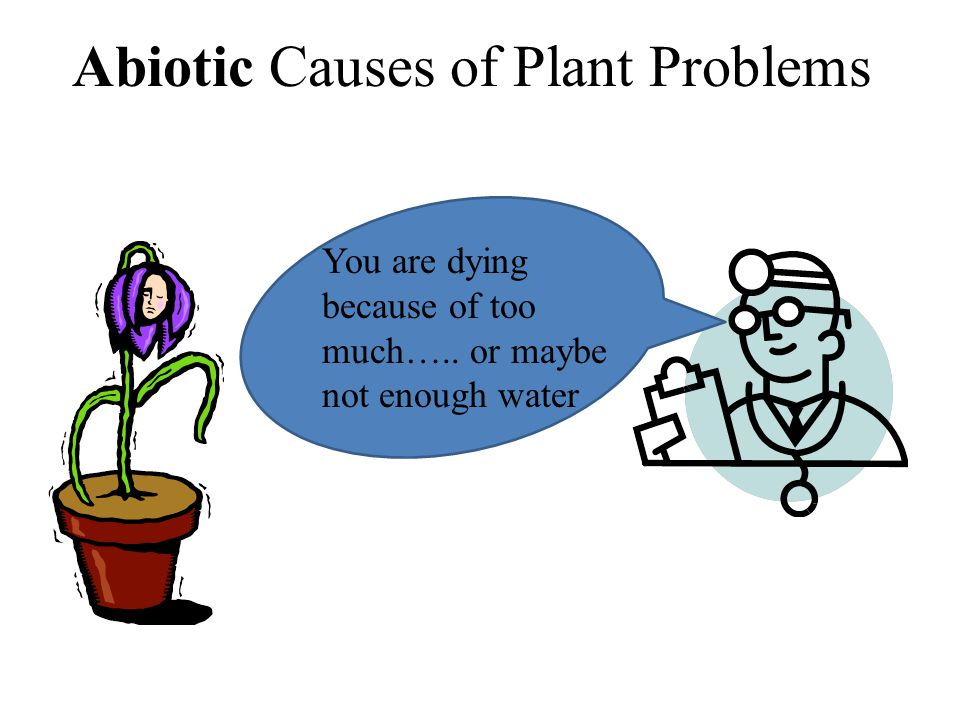 Abiotic Causes of Plant Problems (Abiotic means non-living) You are dying because of too much….. or maybe not enough water