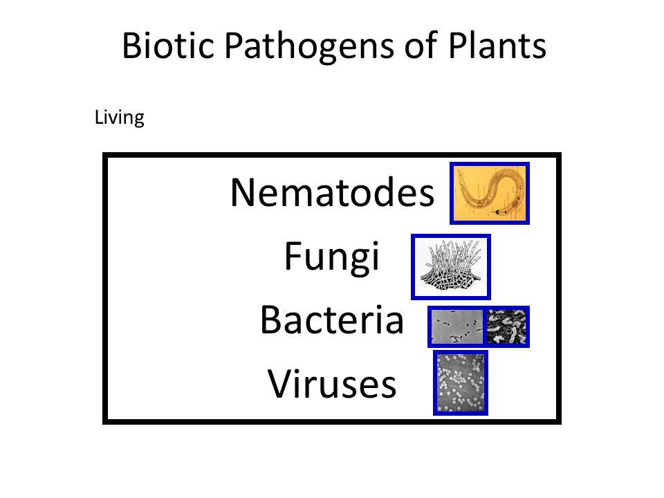Biotic Pathogens of Plants Nematodes Fungi Bacteria Viruses Living