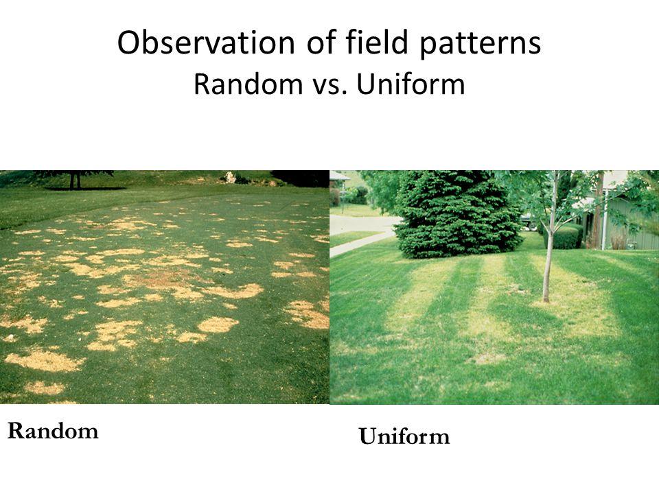 Observation of field patterns Random vs. Uniform Uniform Random