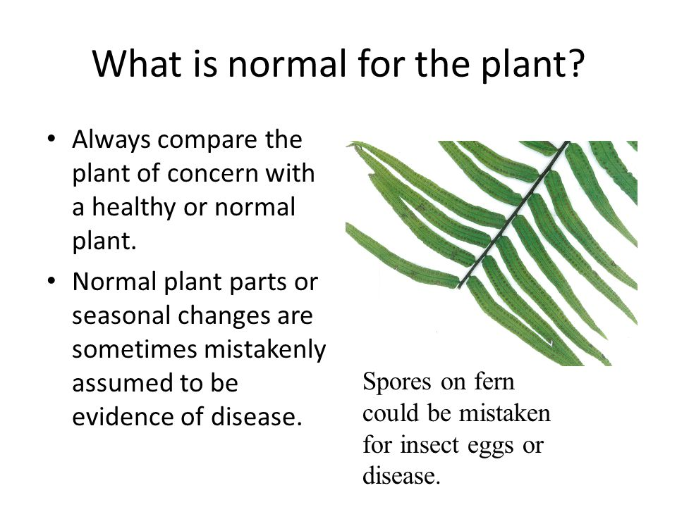 Abiotic Causes of Plant Problems (Abiotic means non-living) You are dying because of too much…..