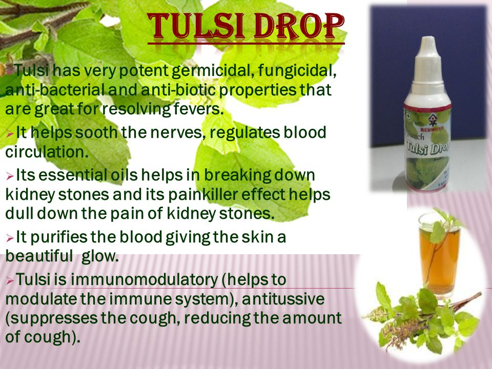  Tulsi has very potent germicidal, fungicidal, anti-bacterial and anti-biotic properties that are great for resolving fevers.