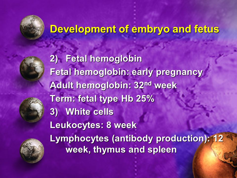Development of embryo and fetus 2)Fetal hemoglobin Fetal hemoglobin: early pregnancy Adult hemoglobin: 32 nd week Term: fetal type Hb 25% 3)White cell