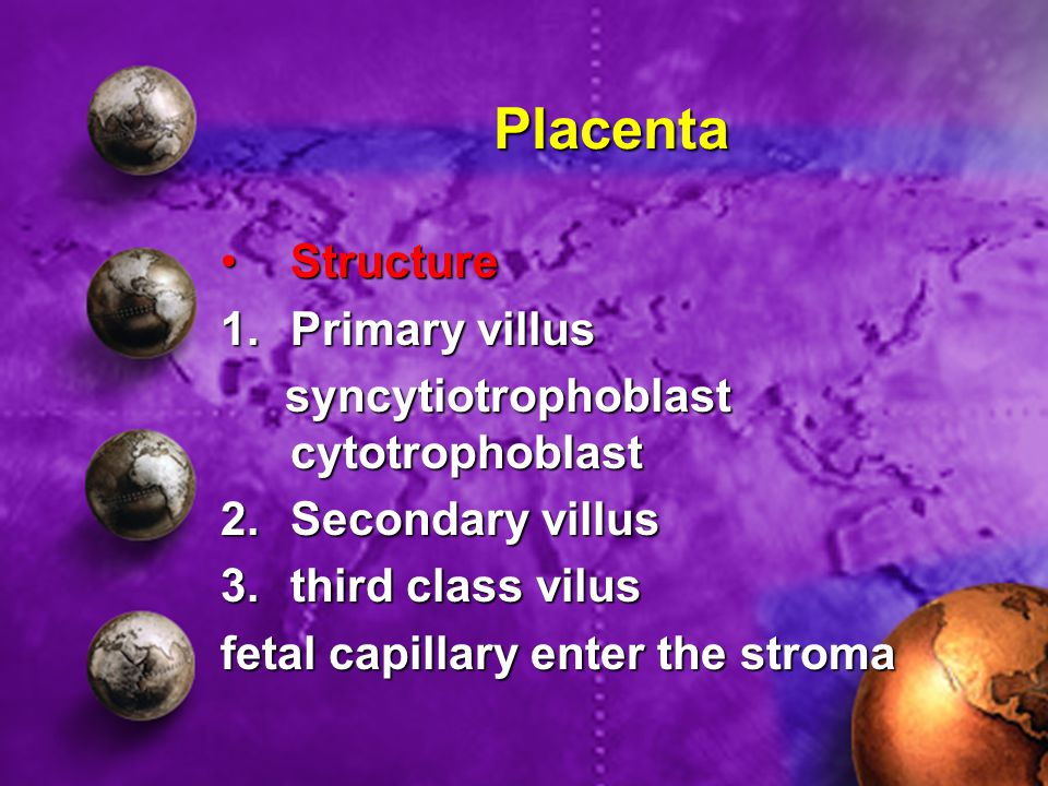 Placenta StructureStructure 1.Primary villus syncytiotrophoblast cytotrophoblast syncytiotrophoblast cytotrophoblast 2.Secondary villus 3.third class vilus fetal capillary enter the stroma