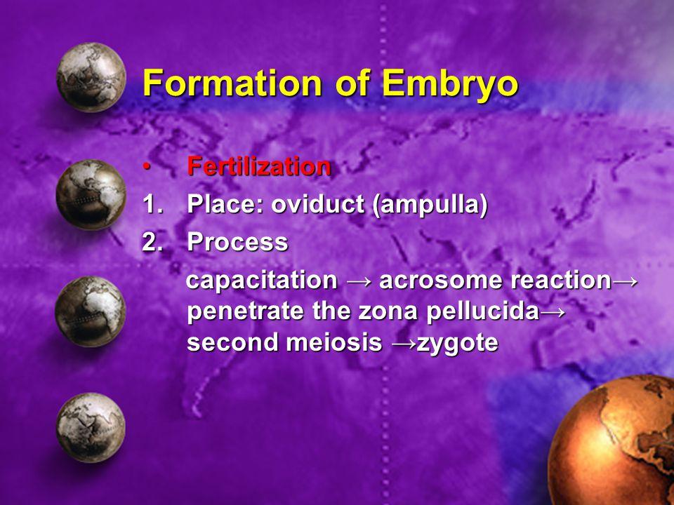 Formation of Embryo FertilizationFertilization 1.Place: oviduct (ampulla) 2.Process capacitation → acrosome reaction→ penetrate the zona pellucida→ se