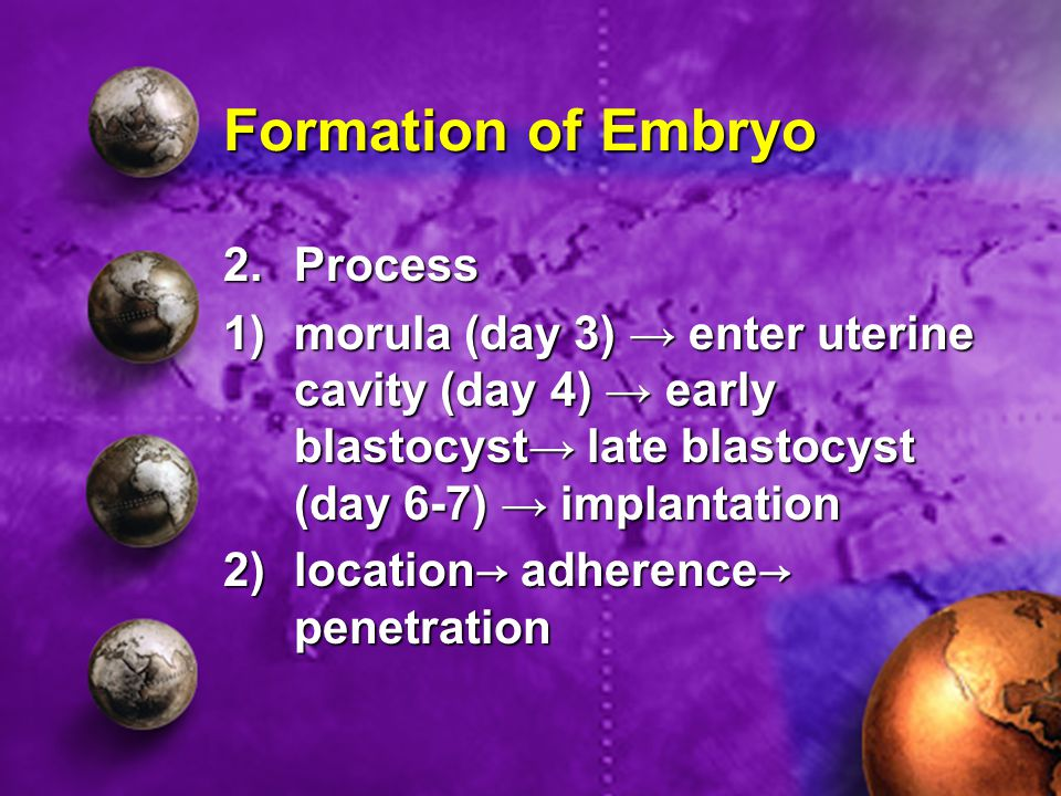 Formation of Embryo 2.Process 1)morula (day 3) → enter uterine cavity (day 4) → early blastocyst→ late blastocyst (day 6-7) → implantation 2)location→ adherence→ penetration