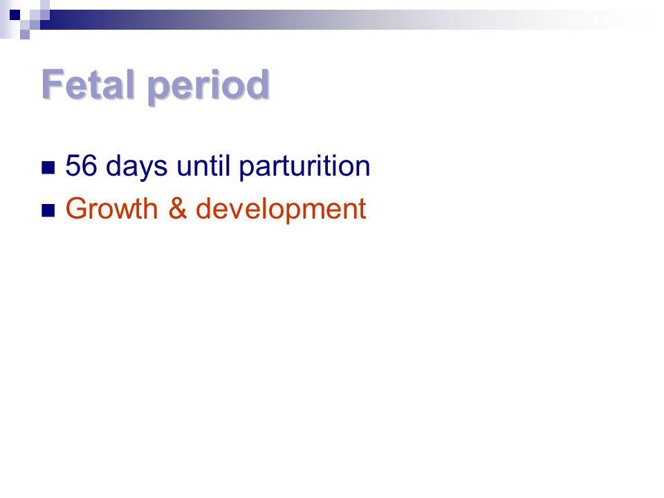 Fetal period 56 days until parturition Growth & development