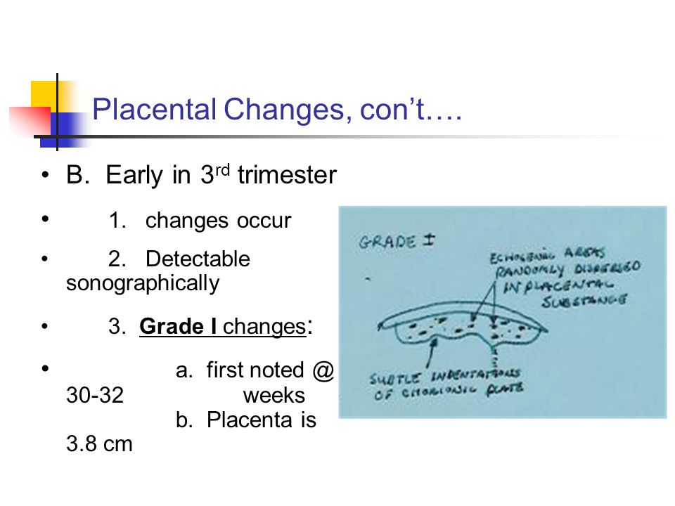 Placental Changes, con't…. B. Early in 3 rd trimester 1.
