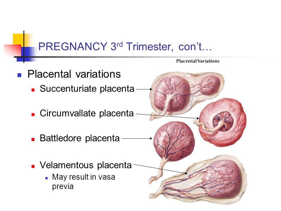 PREGNANCY 3 rd Trimester, con't… Placental variations Succenturiate placenta Circumvallate placenta Battledore placenta Velamentous placenta May result in vasa previa