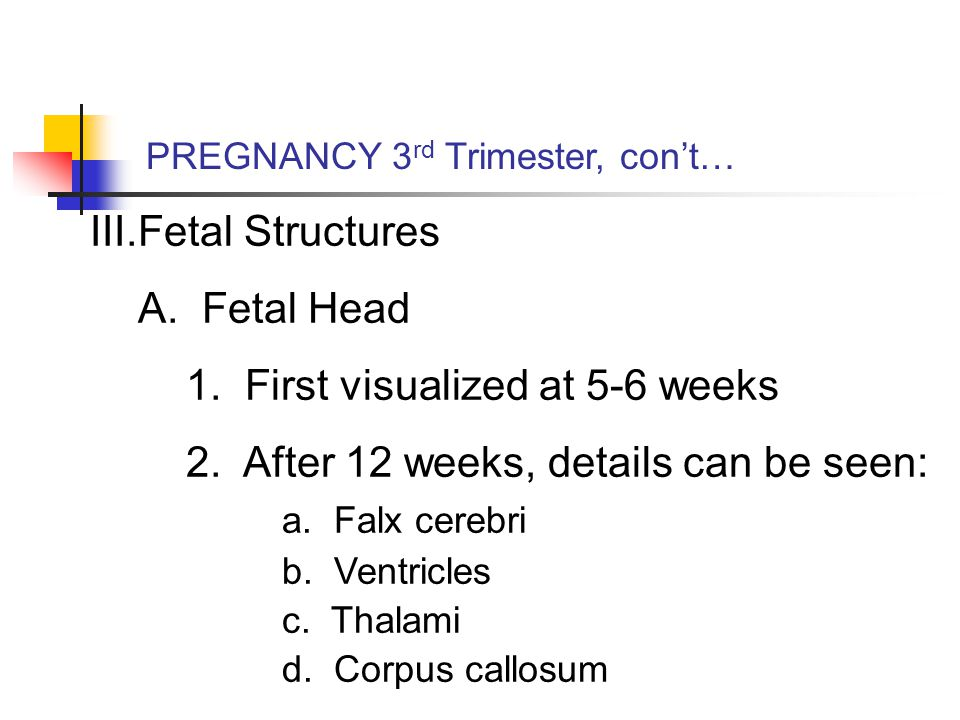 III.Fetal Structures A. Fetal Head 1. First visualized at 5-6 weeks 2.