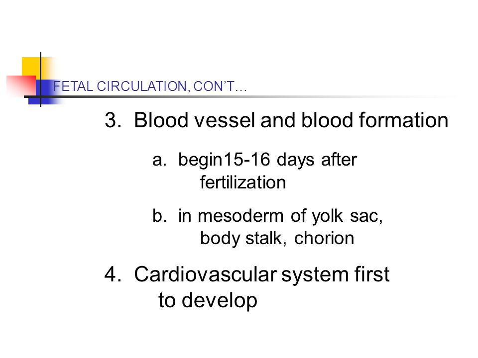 FETAL CIRCULATION, CON'T… 3. Blood vessel and blood formation a.