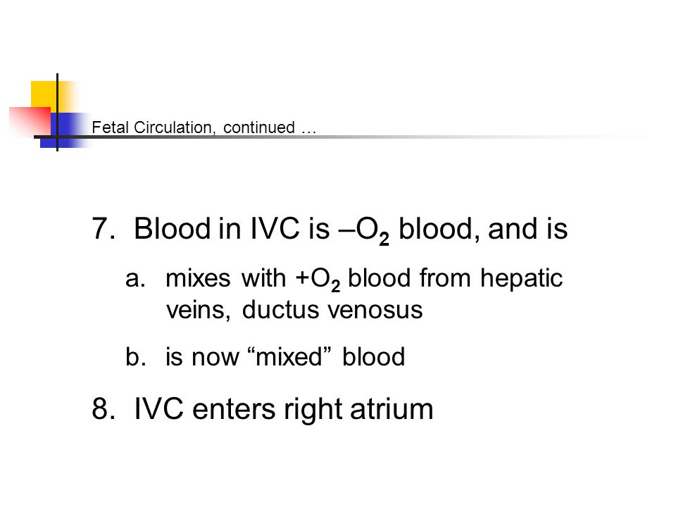 Fetal Circulation, continued … 7. Blood in IVC is –O 2 blood, and is a.