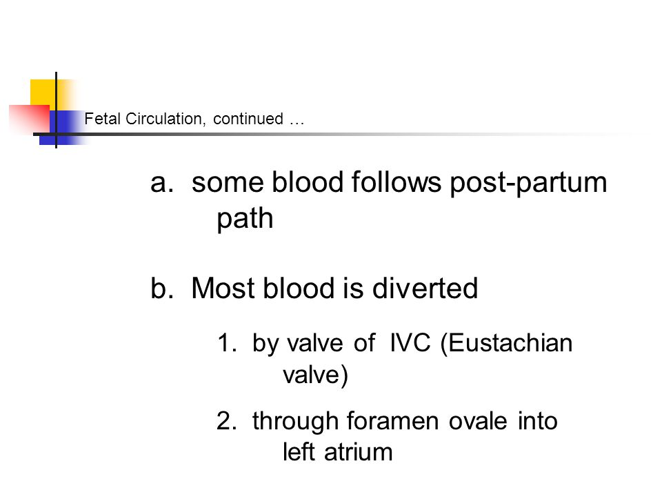 Fetal Circulation, continued … a. some blood follows post-partum path b.