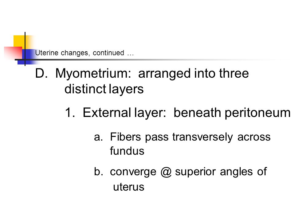 Uterine changes, continued … D. Myometrium: arranged into three distinct layers 1.