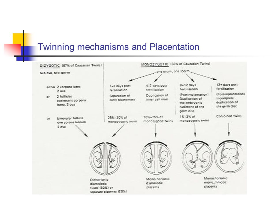 Twinning mechanisms and Placentation