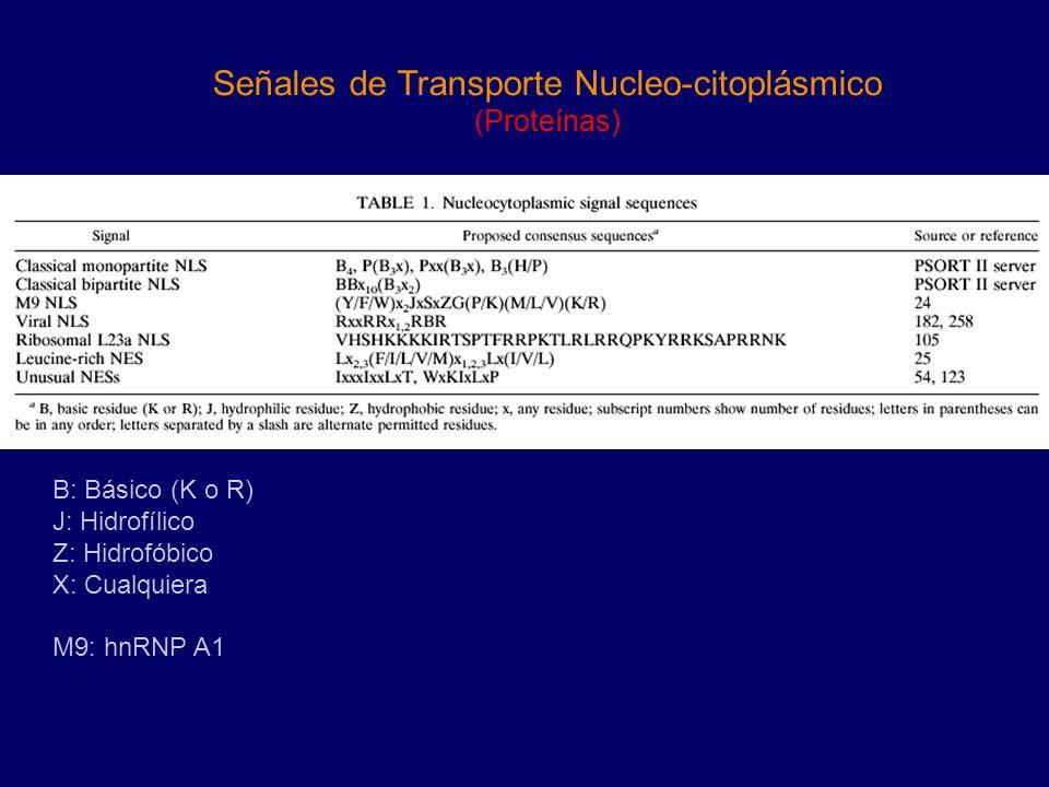 Señales de Transporte Nucleo-citoplásmico (Proteínas) B: Básico (K o R) J: Hidrofílico Z: Hidrofóbico X: Cualquiera M9: hnRNP A1