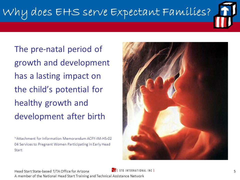 Head Start State-based T/TA Office for Arizona A member of the National Head Start Training and Technical Assistance Network 6 Why does EHS serve Expectant Families.