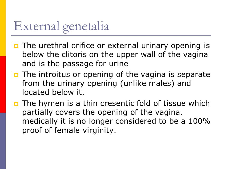 External genetalia  The urethral orifice or external urinary opening is below the clitoris on the upper wall of the vagina and is the passage for uri