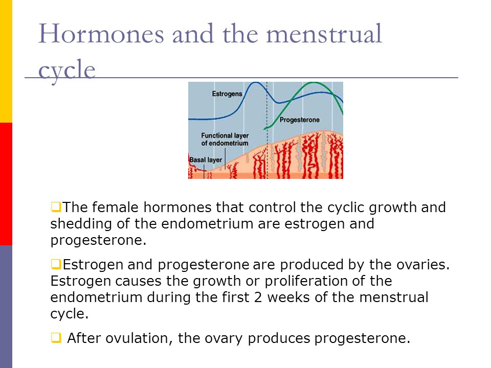  The female hormones that control the cyclic growth and shedding of the endometrium are estrogen and progesterone.  Estrogen and progesterone are pr