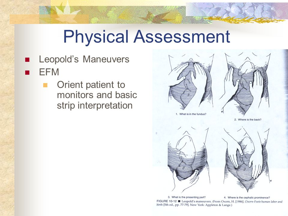 Physical Assessment Leopold's Maneuvers EFM Orient patient to monitors and basic strip interpretation