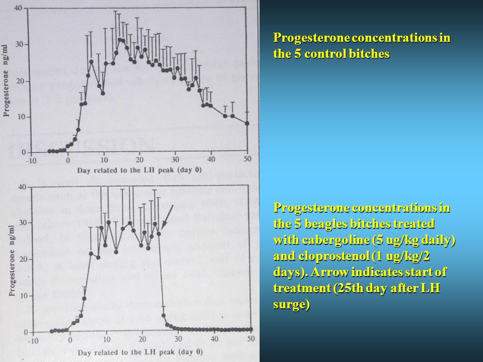 Progesterone concentrations in the 5 control bitches Progesterone concentrations in the 5 beagles bitches treated with cabergoline (5 ug/kg daily) and cloprostenol (1 ug/kg/2 days).