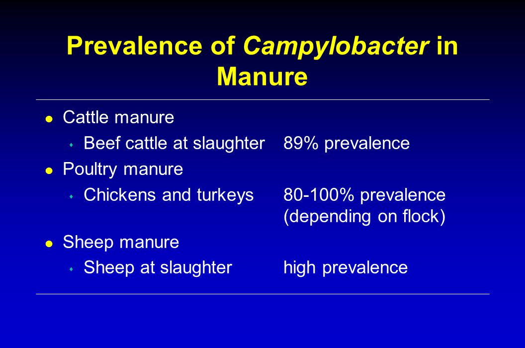 Prevalence of Campylobacter in Manure l Cattle manure s Beef cattle at slaughter 89% prevalence l Poultry manure s Chickens and turkeys80-100% prevale