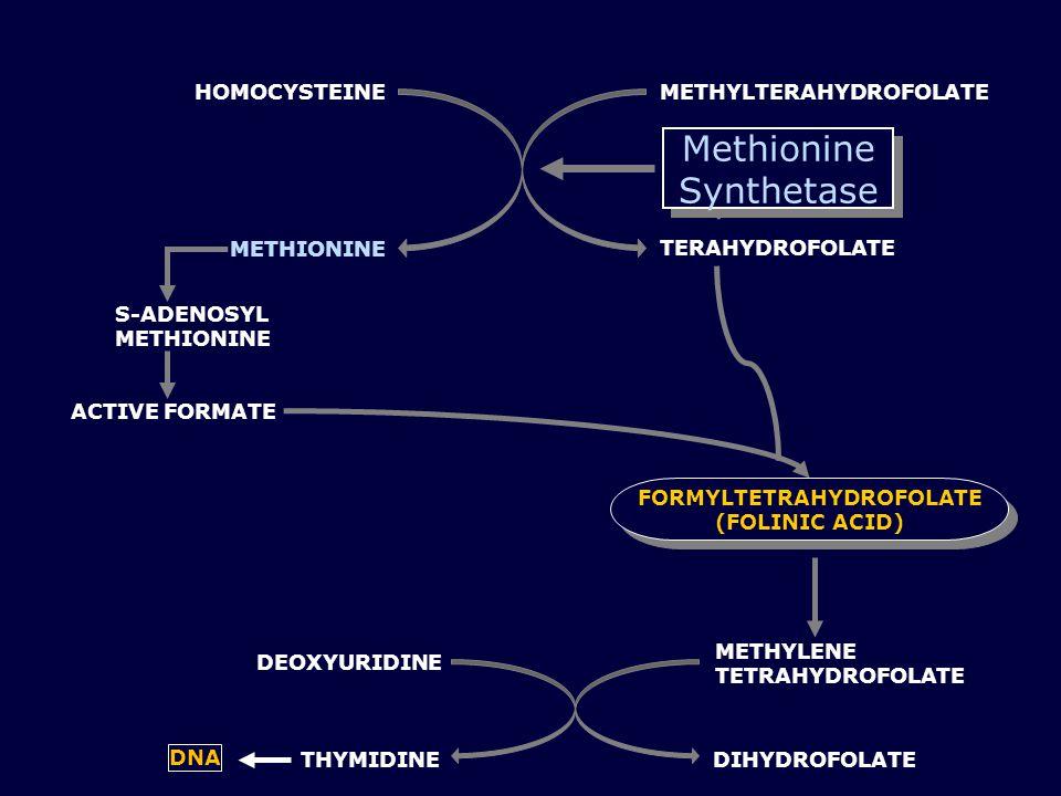 METHYLTERAHYDROFOLATEHOMOCYSTEINE METHIONINE TERAHYDROFOLATE S-ADENOSYL METHIONINE ACTIVE FORMATE FORMYLTETRAHYDROFOLATE (FOLINIC ACID) Methionine Synthetase METHYLENE TETRAHYDROFOLATE DIHYDROFOLATE THYMIDINE DNA DEOXYURIDINE
