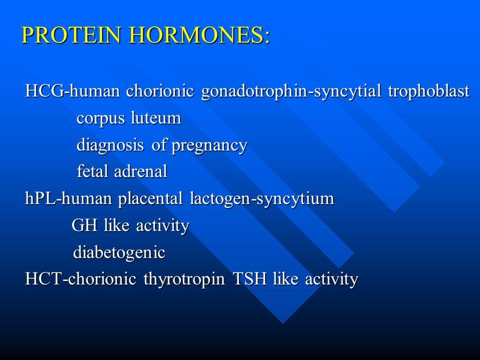 PROTEIN HORMONES: HCG-human chorionic gonadotrophin-syncytial trophoblast corpus luteum corpus luteum diagnosis of pregnancy diagnosis of pregnancy fetal adrenal fetal adrenal hPL-human placental lactogen-syncytium GH like activity GH like activitydiabetogenic HCT-chorionic thyrotropin TSH like activity