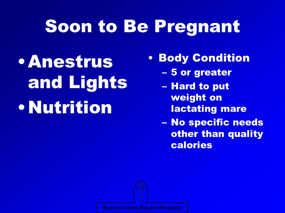 Brazos Valley Equine Hospital Soon to Be Pregnant Anestrus and Lights Nutrition Body Condition –5 or greater –Hard to put weight on lactating mare –No specific needs other than quality calories