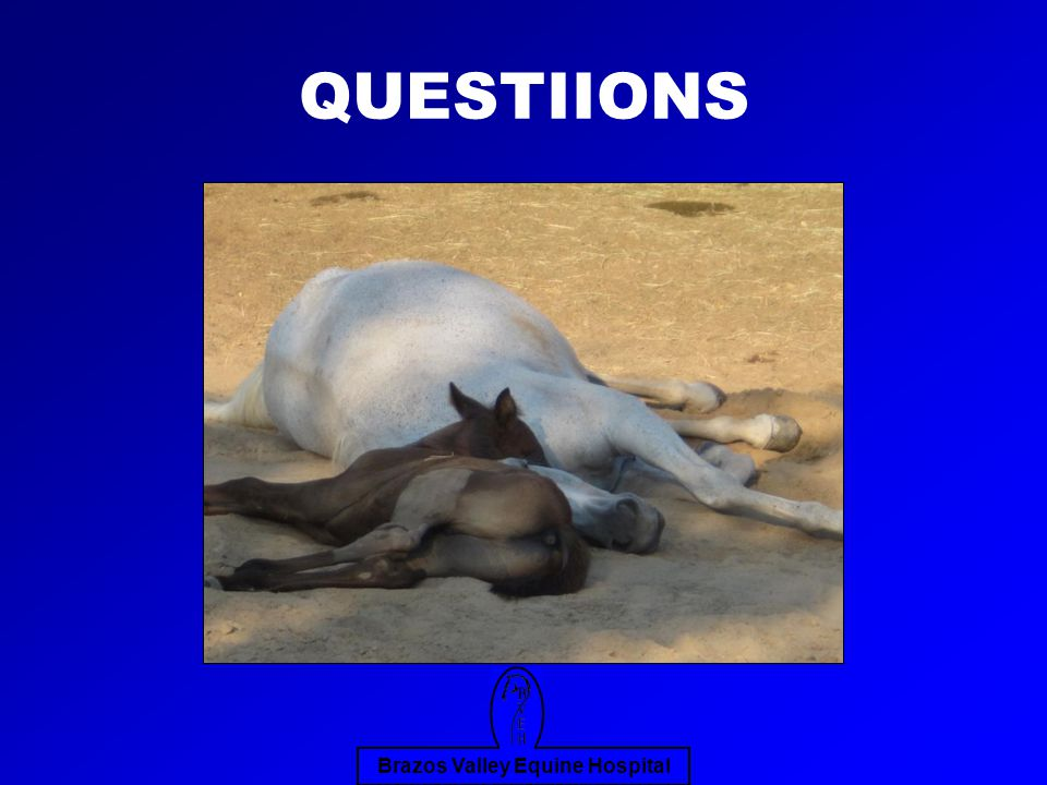 Brazos Valley Equine Hospital QUESTIIONS