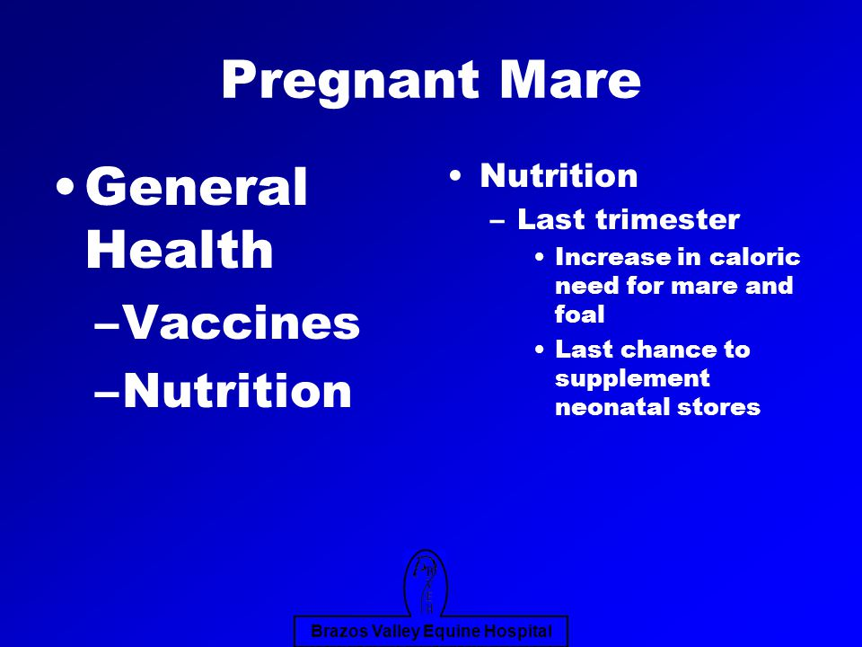 Brazos Valley Equine Hospital Pregnant Mare General Health –Vaccines –Nutrition Nutrition –Last trimester Increase in caloric need for mare and foal Last chance to supplement neonatal stores
