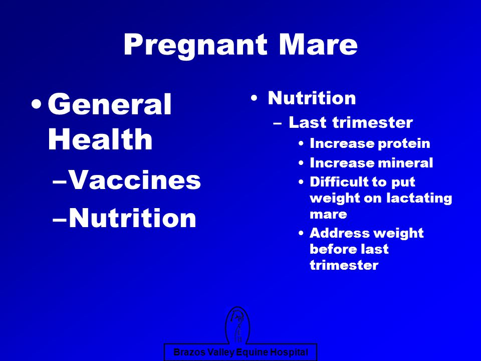 Brazos Valley Equine Hospital Pregnant Mare General Health –Vaccines –Nutrition Nutrition –Last trimester Increase protein Increase mineral Difficult to put weight on lactating mare Address weight before last trimester