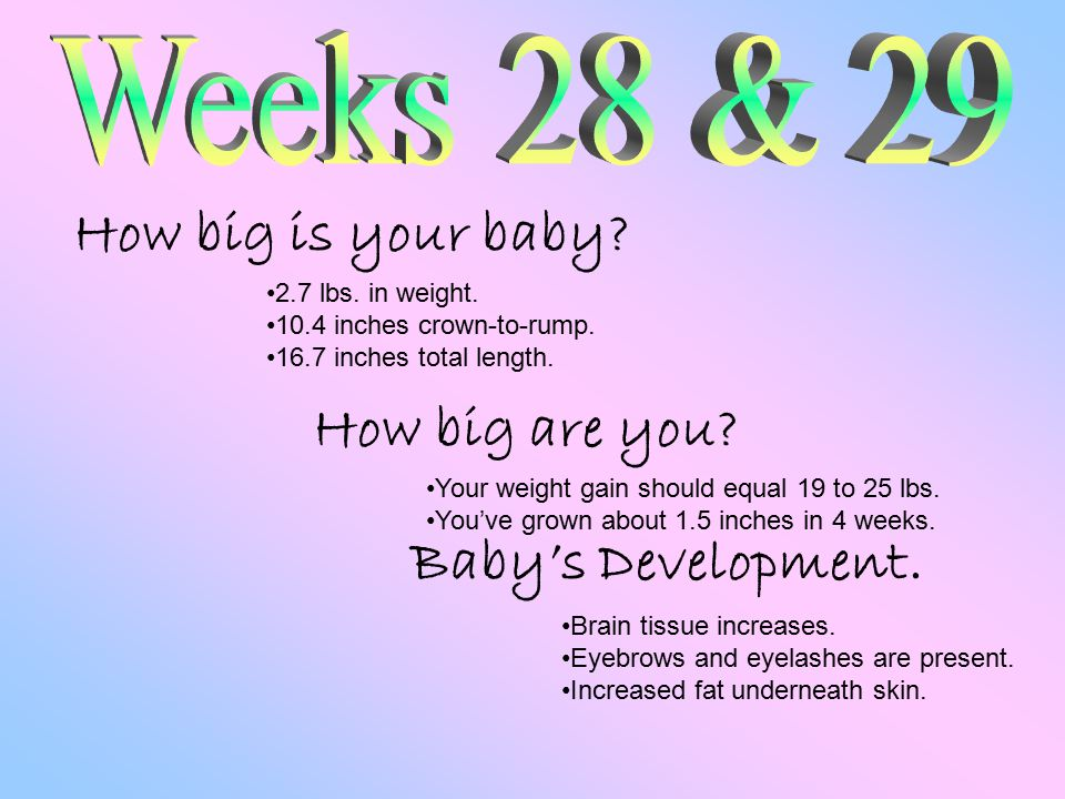 How big is your baby. How big are you. Baby's Development.