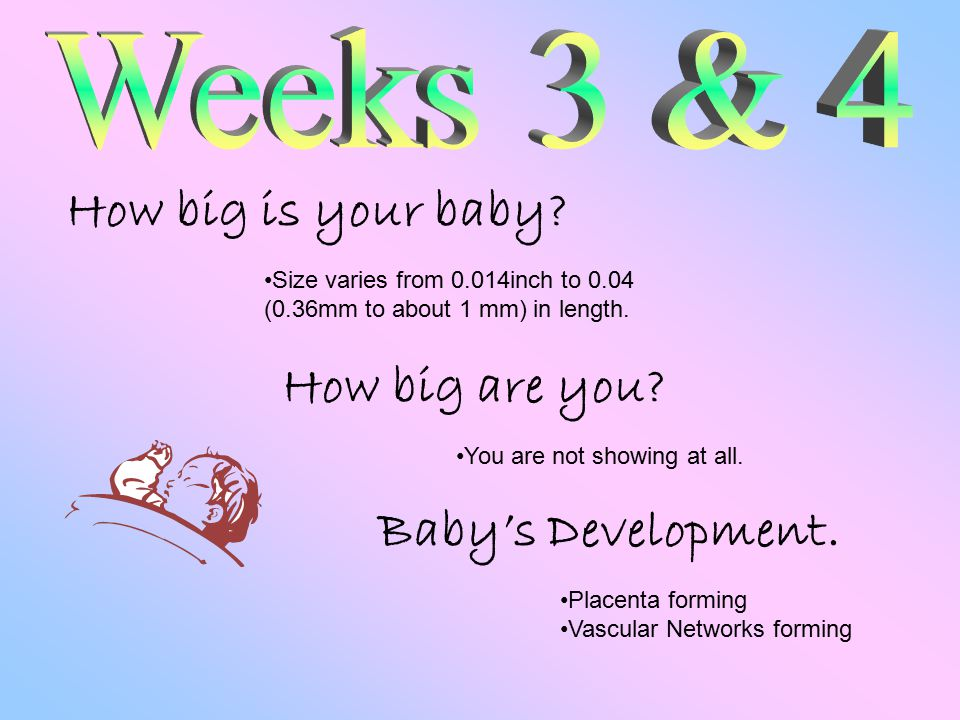 How big is your baby. How big are you.