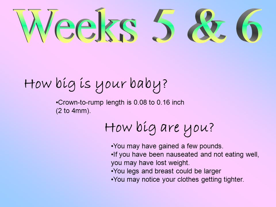 How big is your baby. How big are you. Crown-to-rump length is 0.08 to 0.16 inch (2 to 4mm).