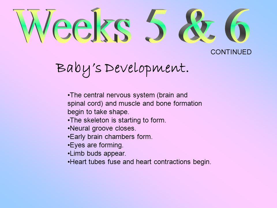 Baby's Development.