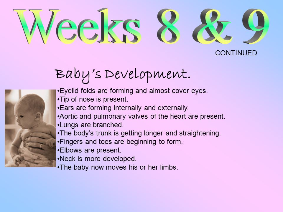 Baby's Development. Eyelid folds are forming and almost cover eyes.