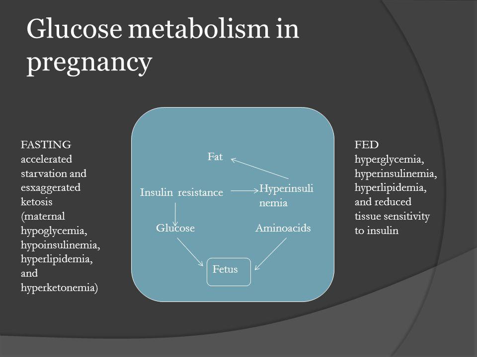 Glucose metabolism in pregnancy Fetus Fat GlucoseAminoacids Insulin resistance Hyperinsuli nemia FASTING accelerated starvation and esxaggerated ketos
