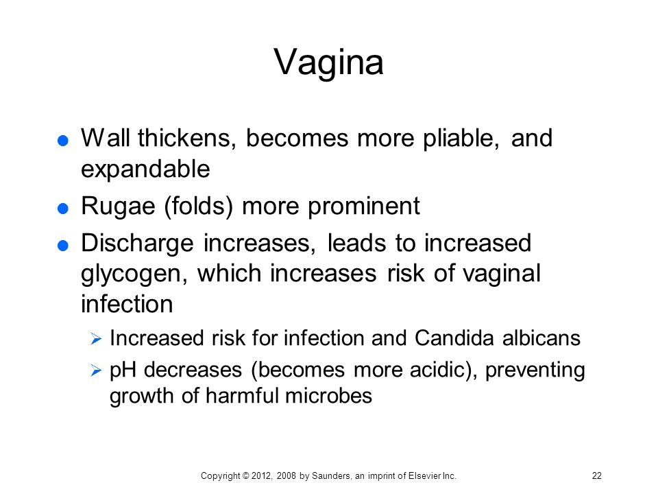 Vagina  Wall thickens, becomes more pliable, and expandable  Rugae (folds) more prominent  Discharge increases, leads to increased glycogen, which