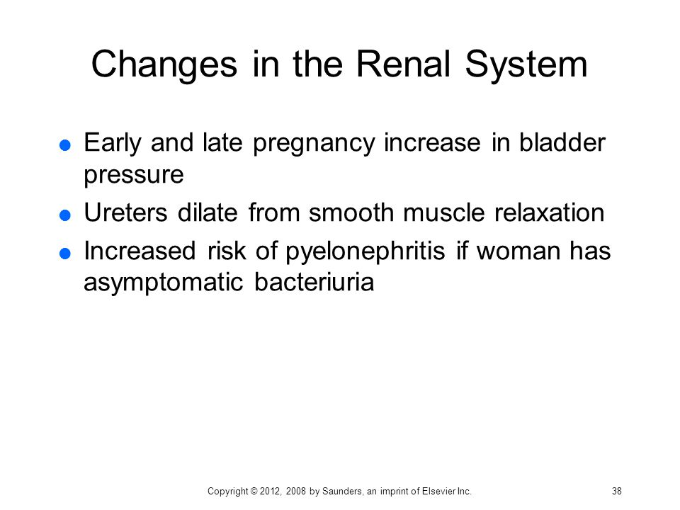 Changes in the Renal System  Early and late pregnancy increase in bladder pressure  Ureters dilate from smooth muscle relaxation  Increased risk of