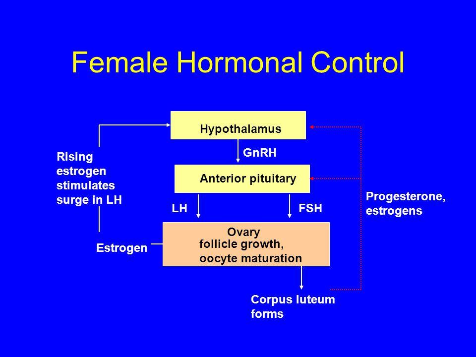 Female Hormonal Control Hypothalamus Anterior pituitary GnRH LHFSH Ovary Estrogen Progesterone, estrogens follicle growth, oocyte maturation Rising estrogen stimulates surge in LH Corpus luteum forms