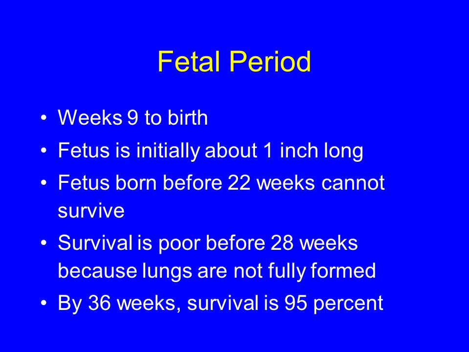 Fetal Period Weeks 9 to birth Fetus is initially about 1 inch long Fetus born before 22 weeks cannot survive Survival is poor before 28 weeks because