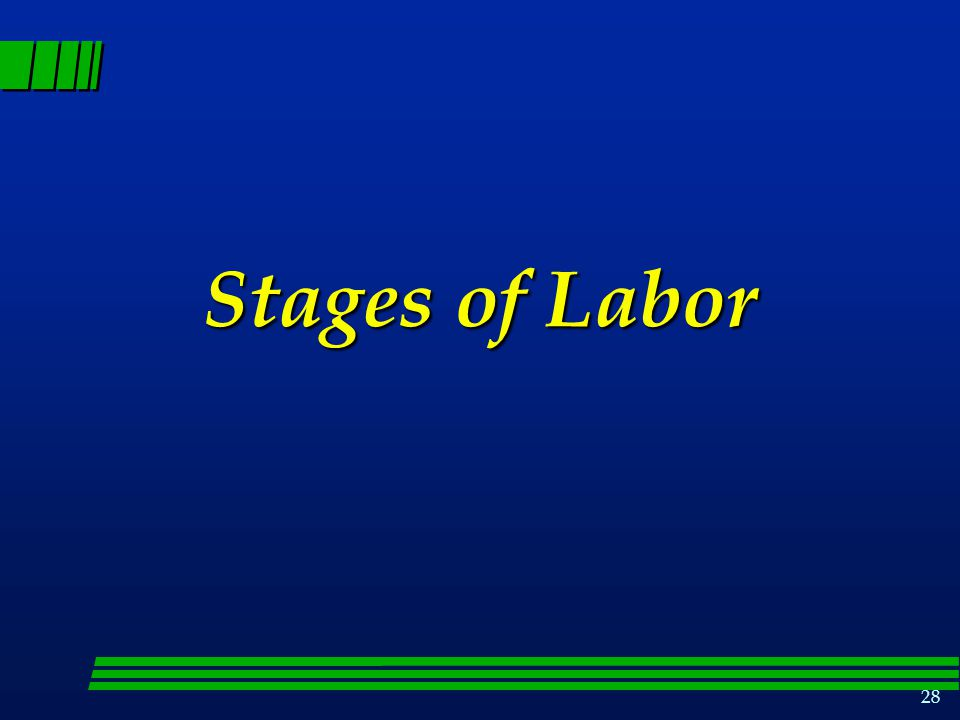 28 Stages of Labor