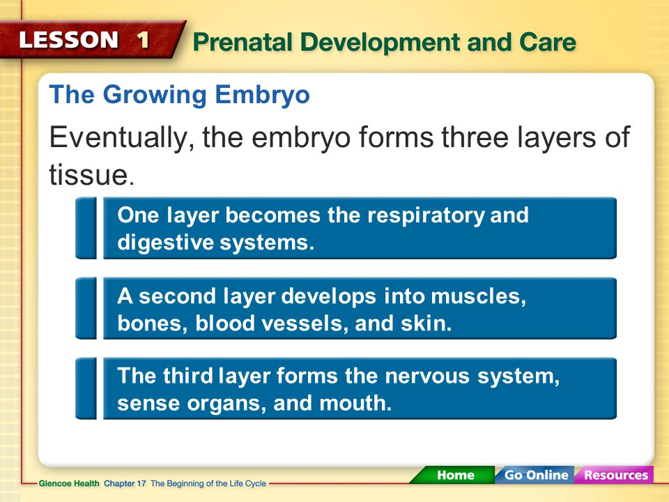The Very Beginning The embryo is called a fetus after about eight weeks.