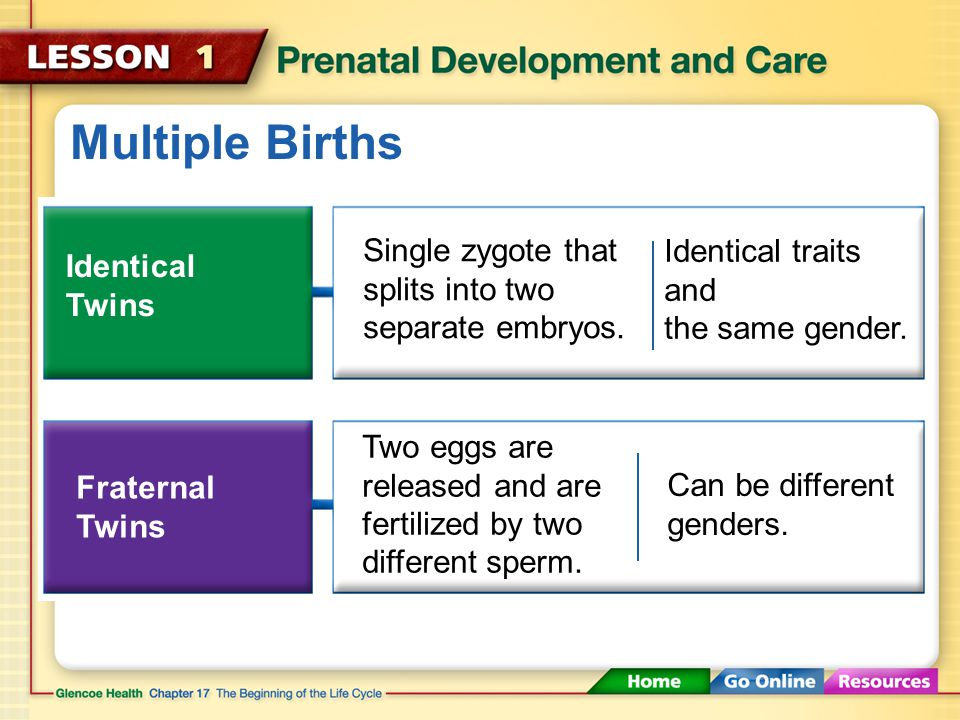 Multiple Births In most cases, fertilization results in one embryo.