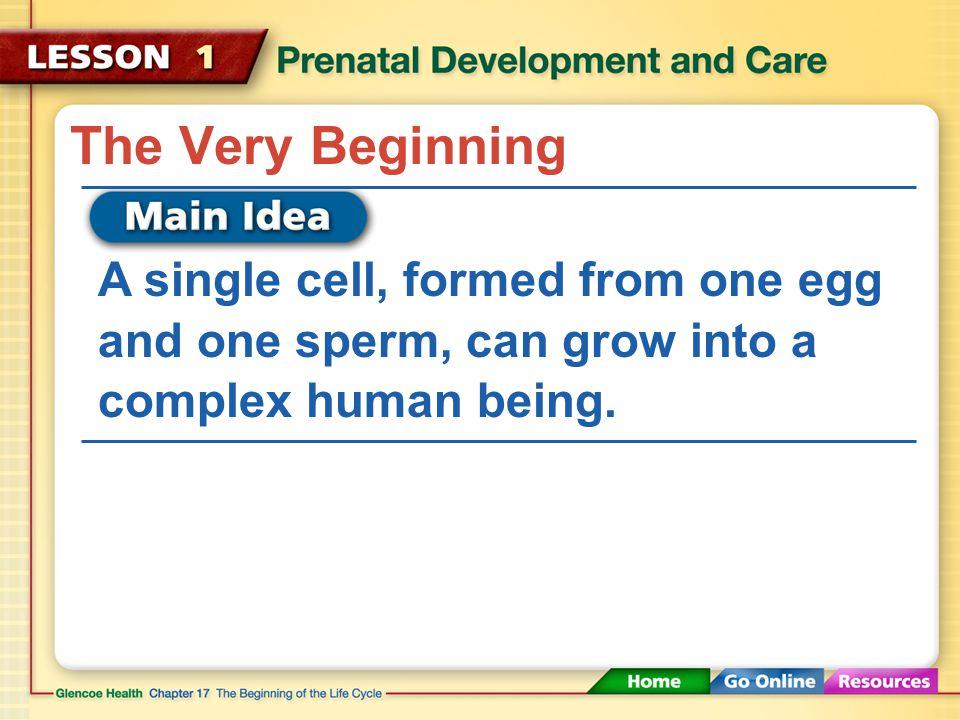 fertilization implantation embryo fetus prenatal care fetal alcohol syndrome