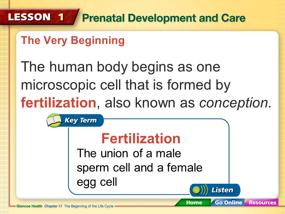 The Very Beginning A single cell, formed from one egg and one sperm, can grow into a complex human being.